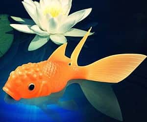color-changing-koi-toy-300x250