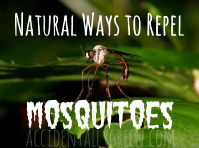 5 Great Ways To Repel Mosquitoes