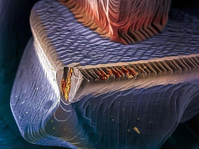 Amazing Science Photography
