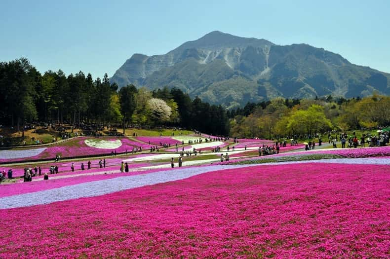 Japan_Hitachi_Seaside_Park