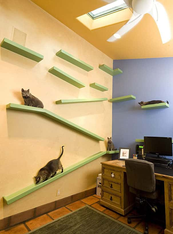 cat-paradise-home-trillium-enterprises-8