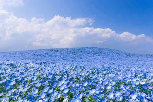 Beautiful Ocean Of Flowers