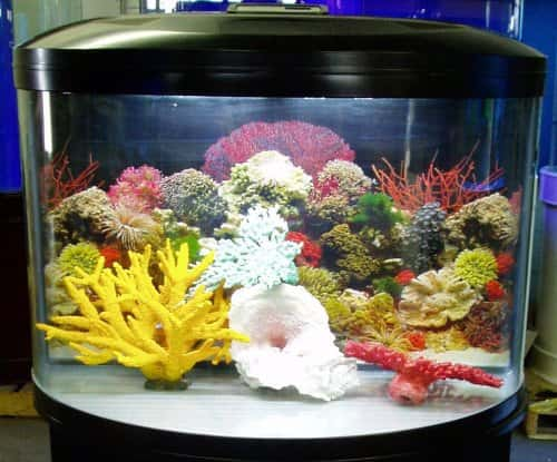 half circle aquarium