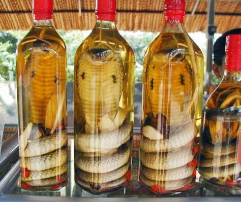 Traditional Asian Snake Wine
