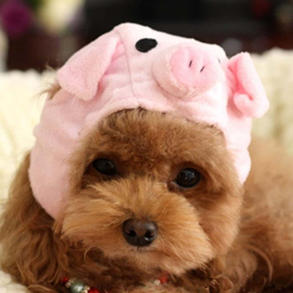 Adorable Hats For Dogs