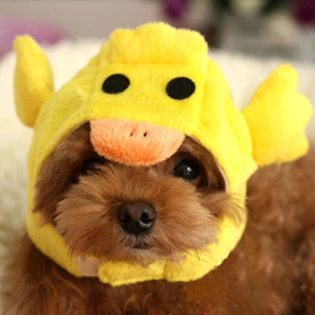duck hat for dog