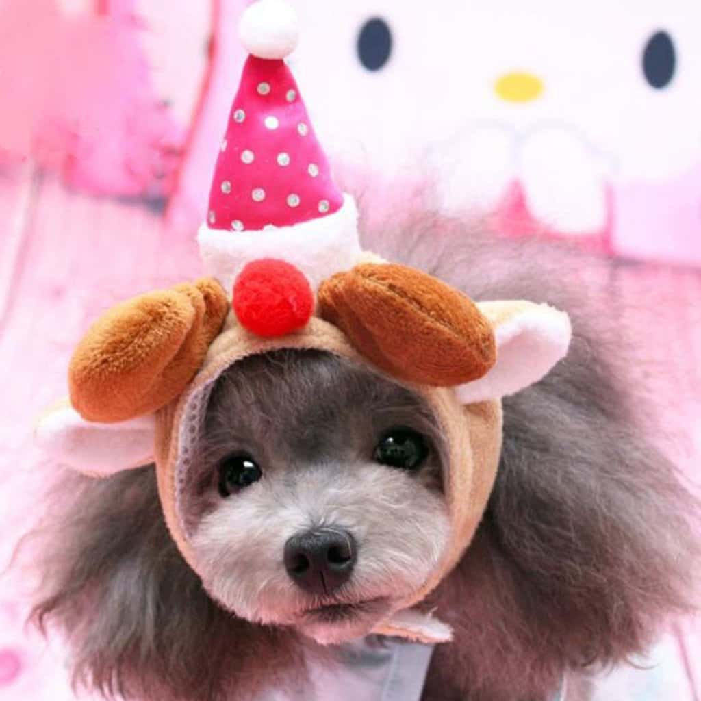 pet party hat