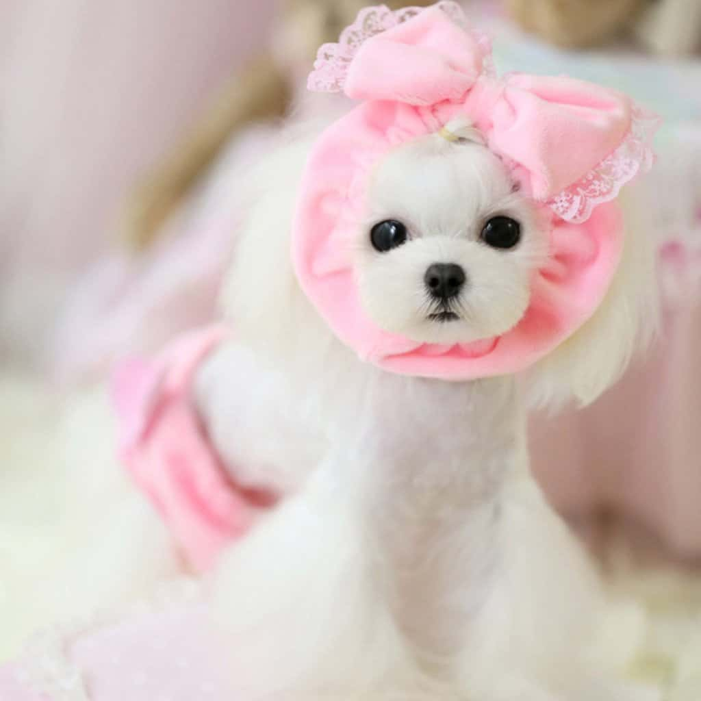pink dog hat bow