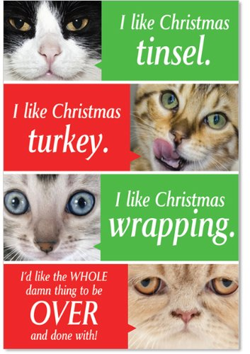 cat-christmas-cards