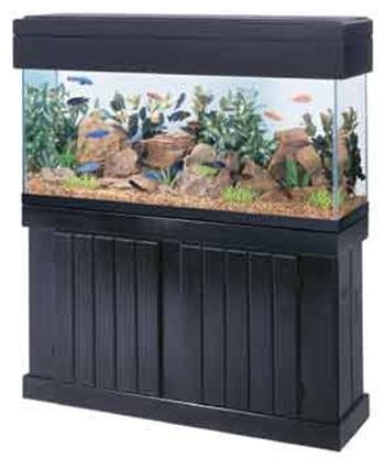 large-aquarium-with-stand