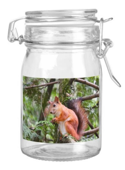 squirrel jar