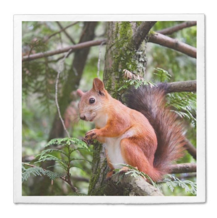 squirrel napkins