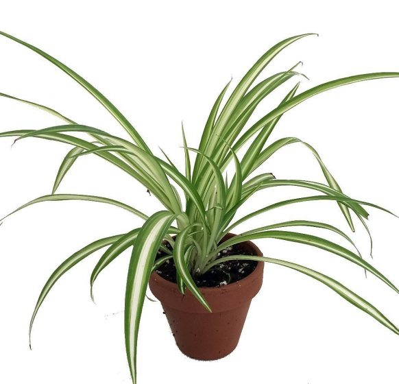 Trendiest Houseplants That Will Also Clean the Air