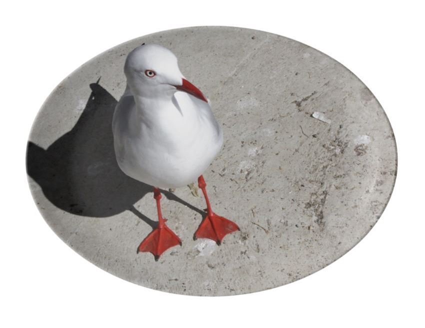 seagull serving platter