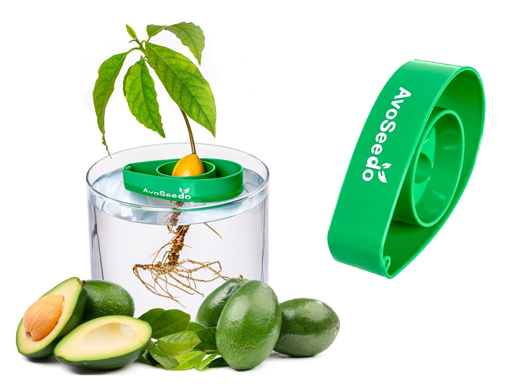 Grow An Avocado Tree