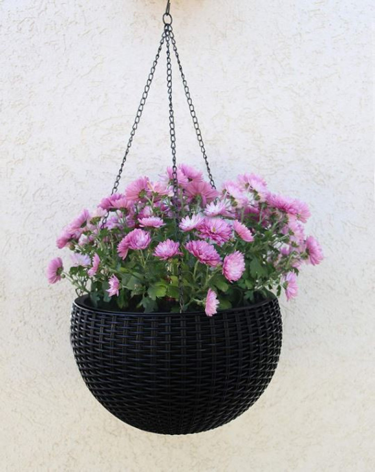 12 Unusual Black Plant Hangers For A Dark and Dramatic Look