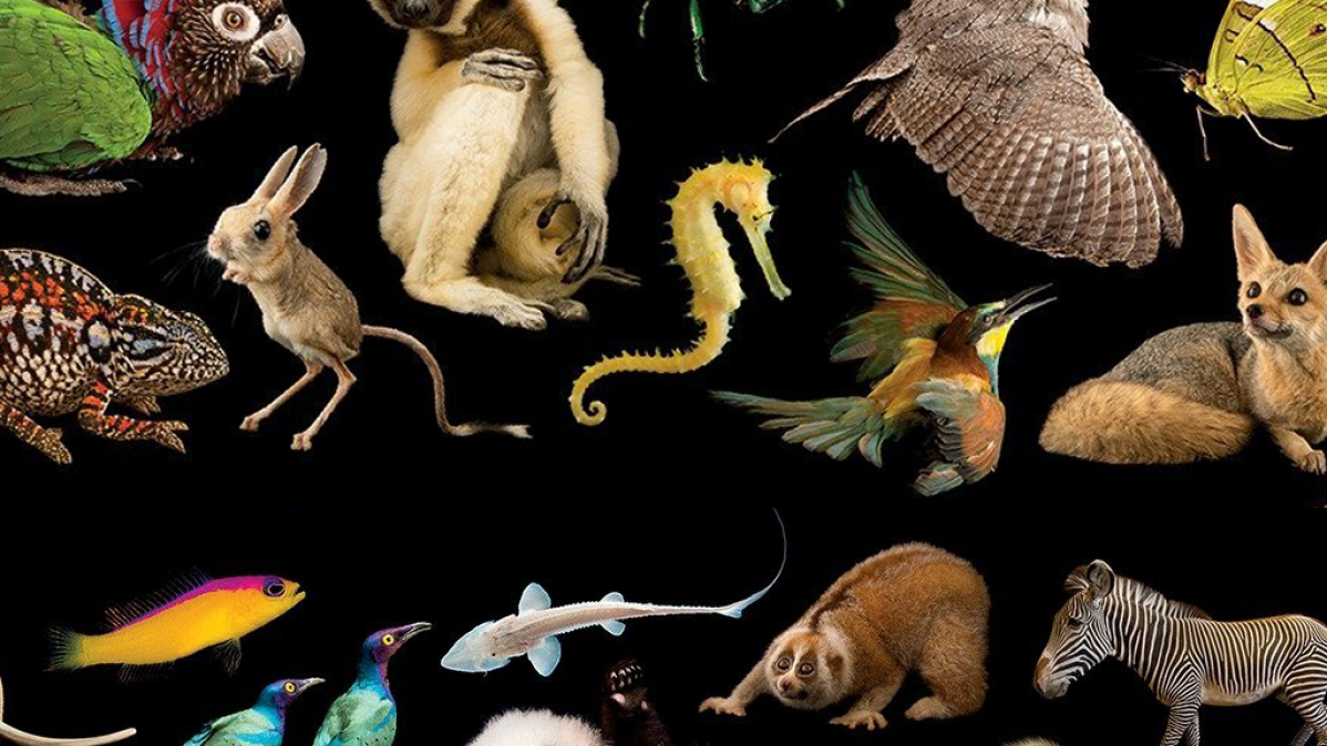 A Quest To Photograph The World's Animals