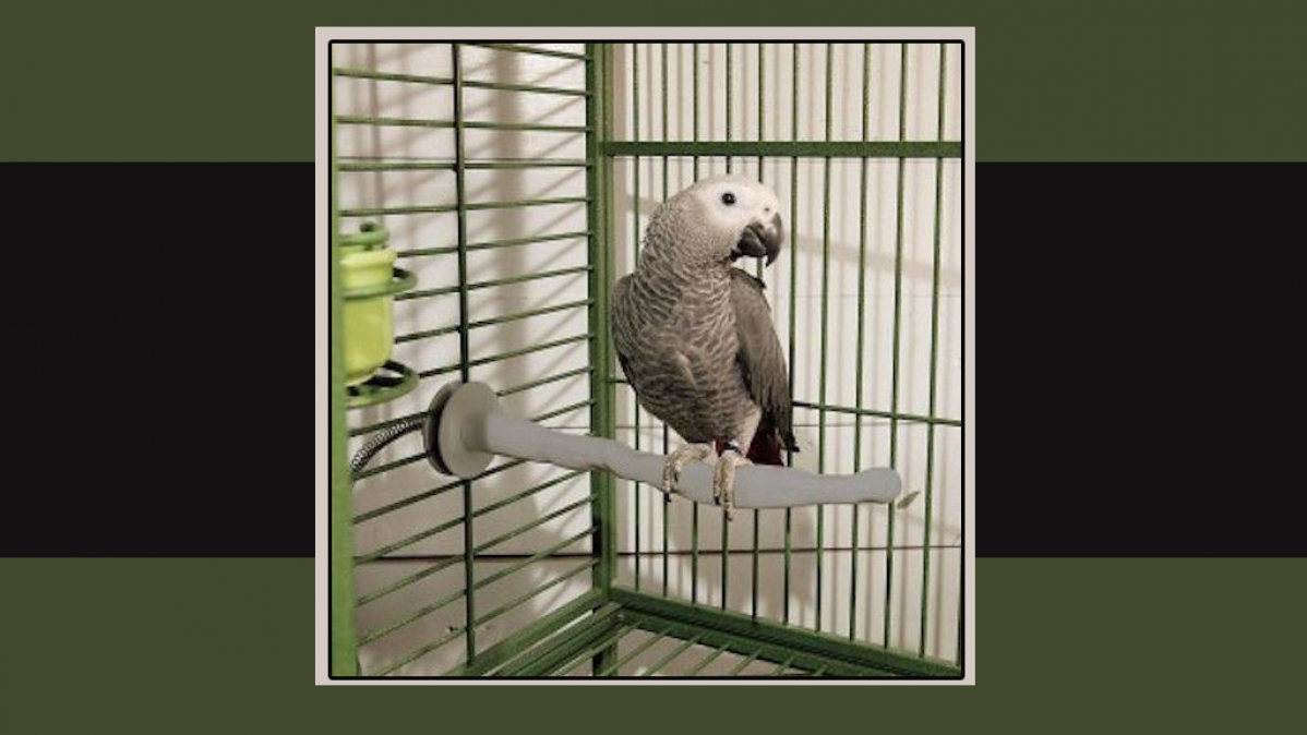 Thermal Heated Perch For Your Favorite Bird