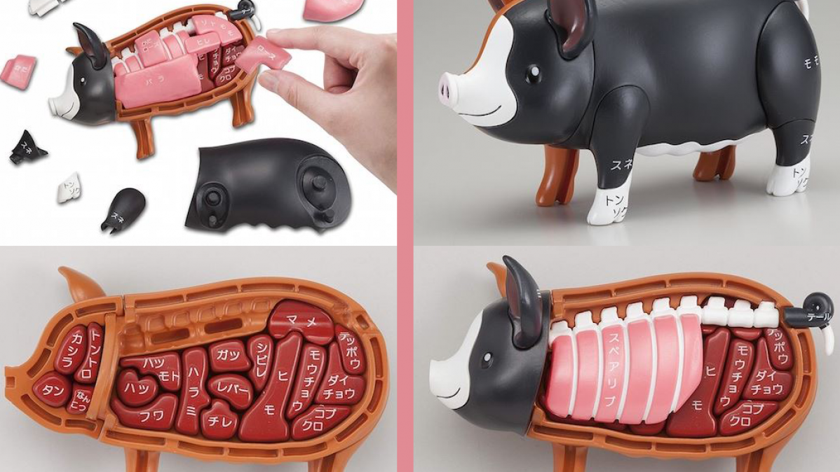 Unusual and Fun 3D Pig Dissection Puzzle