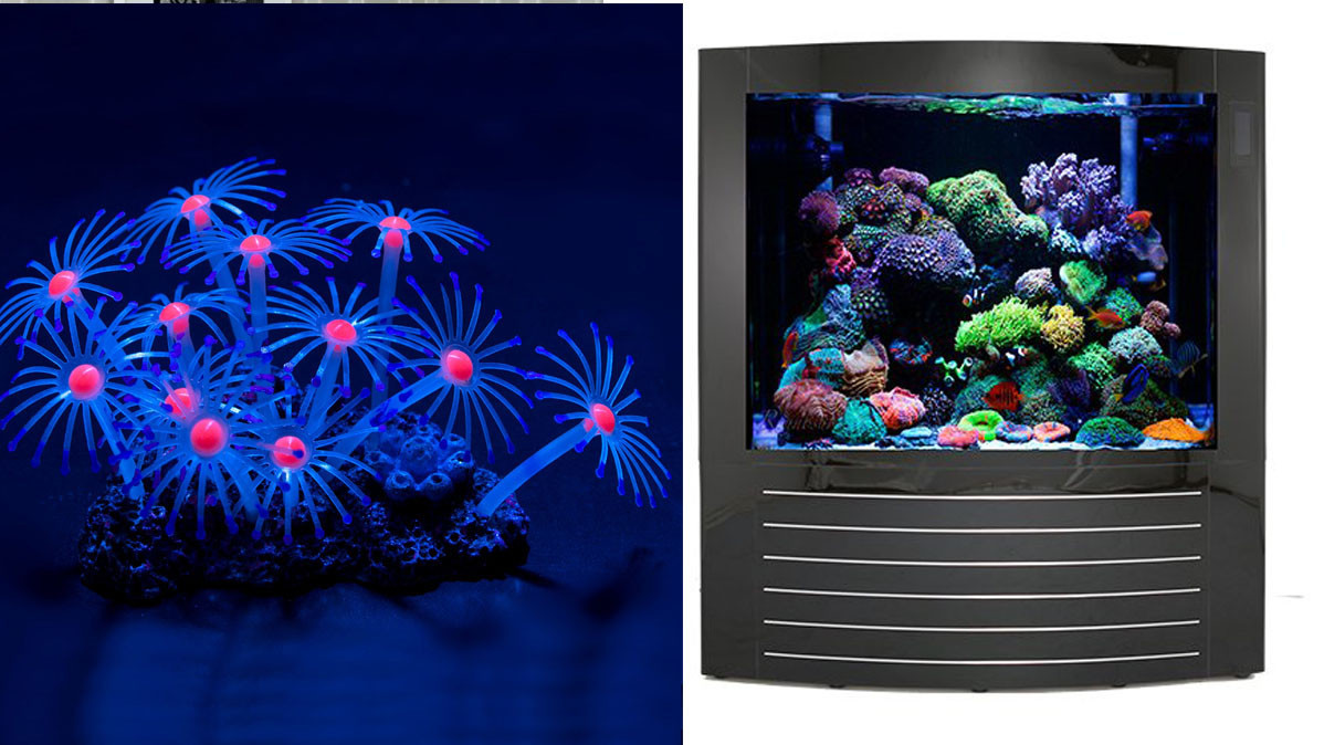 32 Cool Aquarium Ideas To Create Interest