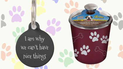 10 Fun and Useful Things To Buy For Your Dog