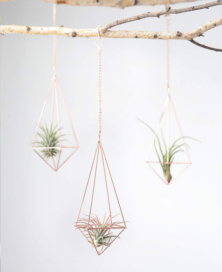 13 Air Plant Display Ideas That Look Fantastic