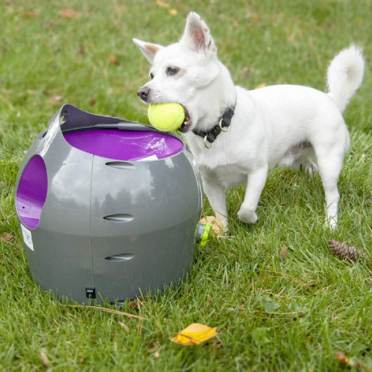 Let Your Dog Play Fetch Himself with Petsafe Automatic Ball Launcher
