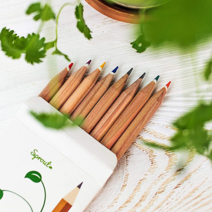 Eco-Friendly Plantable Pencils That Bloom into Flowers