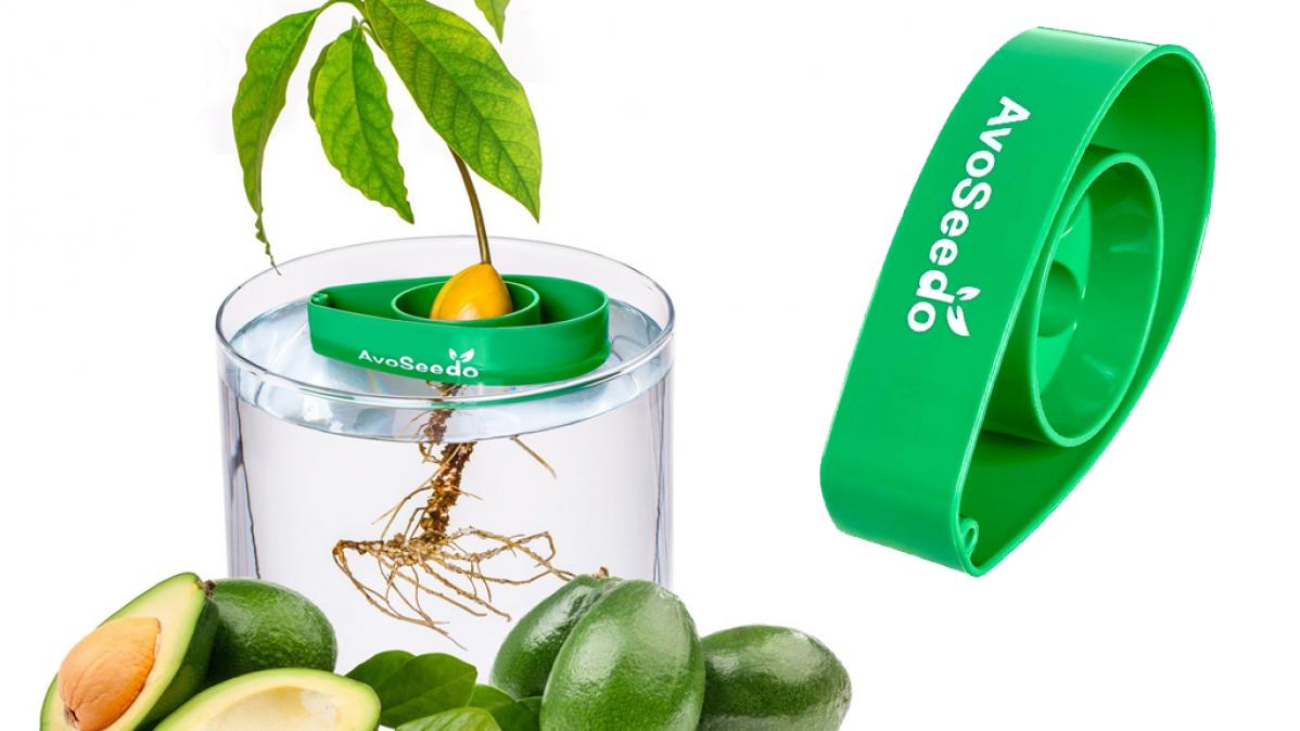 Grow An Avocado Tree With AvoSeedo Kit