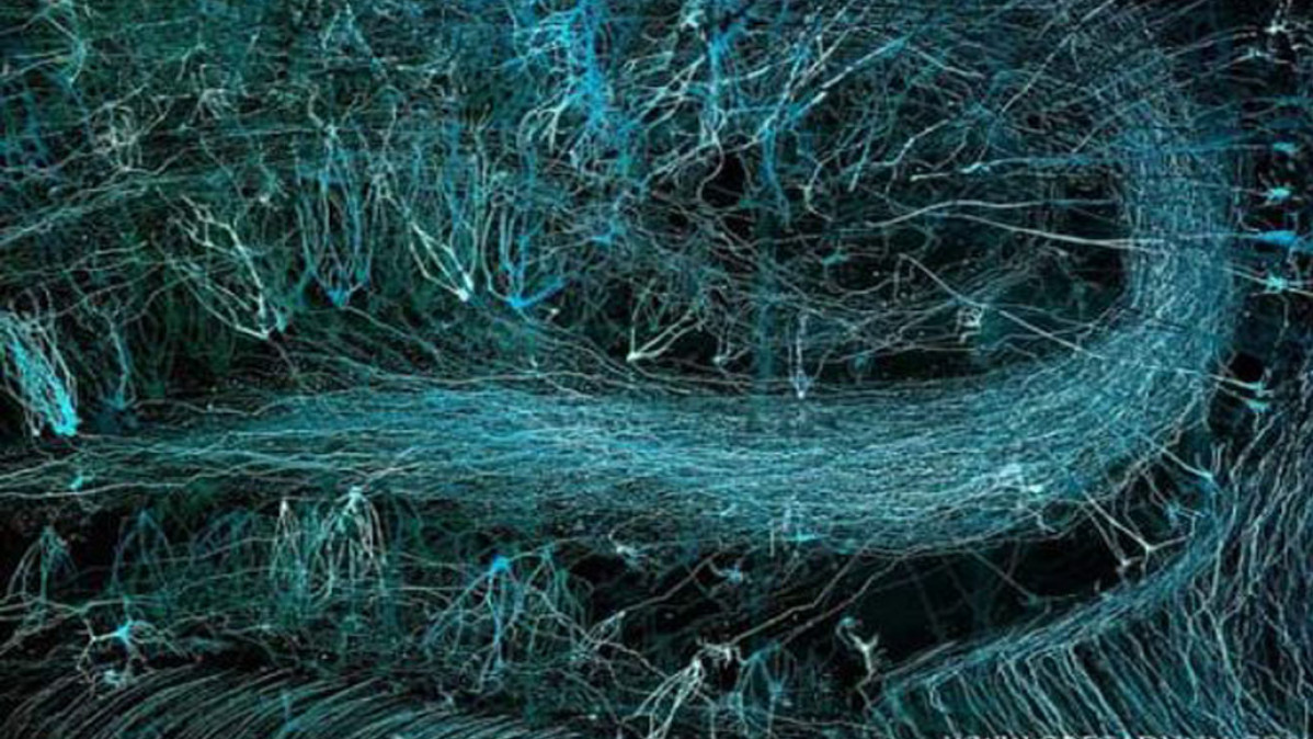 Stunning Images by Neuroscientist-Artist