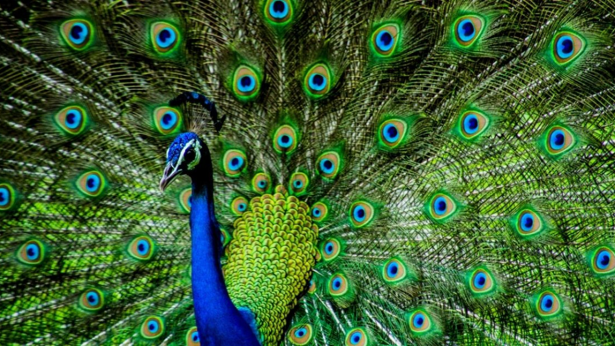 Beautiful Peacock Stationery