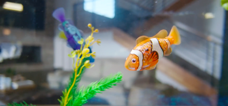 Best-Selling Toy for 2013 – ROBO FISH by ZURU
