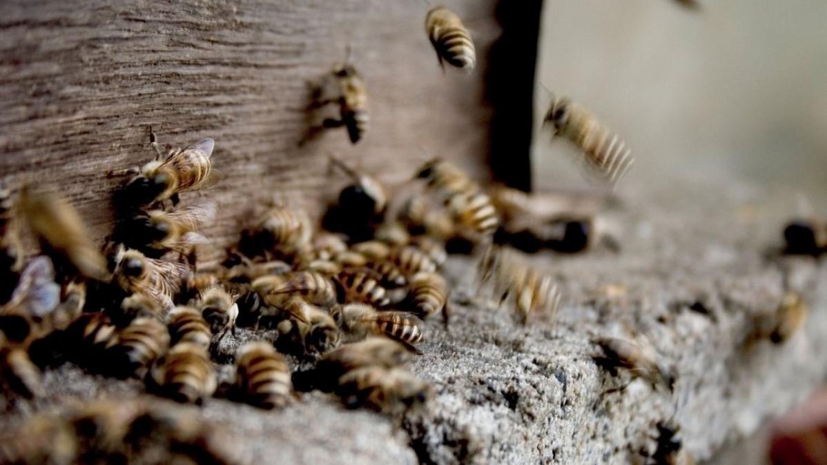 6 Natural Ways To Deter Wasps