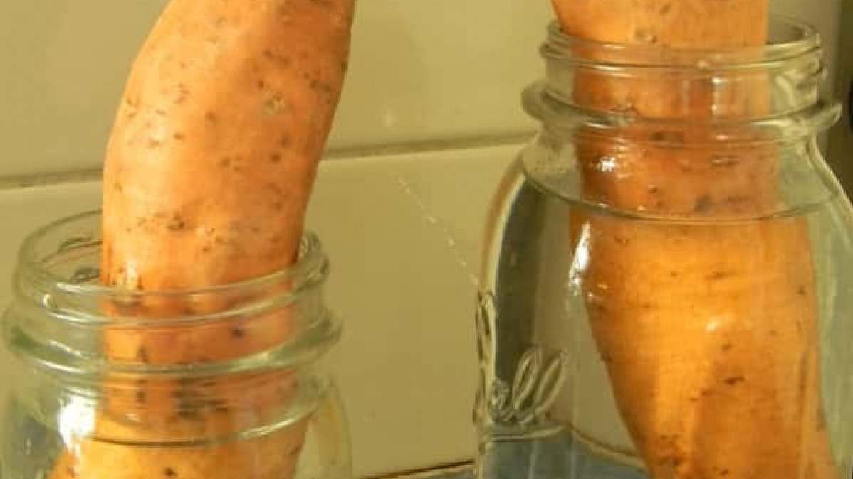 Sweet Potatoes in A Jar