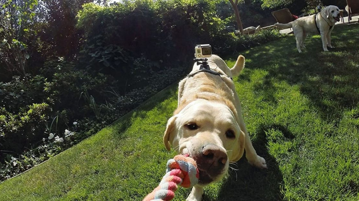 Dog Harness With Camera Mount