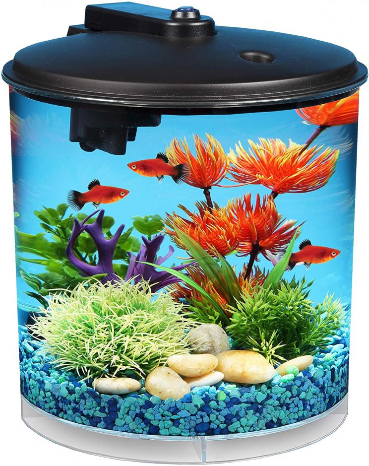 40 Cool Aquarium Ideas That Suit All Kinds of Space